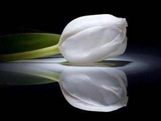 گل، بهترین وسیله برای همدردی