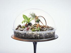 باغچه مینیاتوریباغچه شيشه اي يا تراريوم ظرف شيشه اي است كه داراي محيط مناسبي براي گياهان  است وگياهان در اين مكان پرورش مييابند.