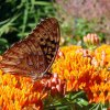 واقعیت هایی در مورد پروانه ها