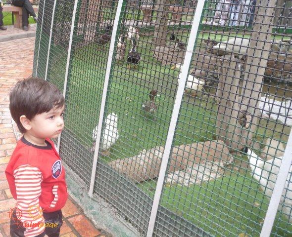 اهورا در کنار قفس پرندگان موزه هفت چنار