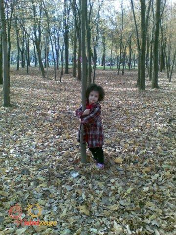 عسل و پاییز پارک !