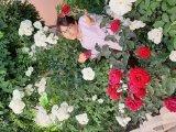 گل بین گلها
