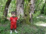 جنگلهای گیسوم