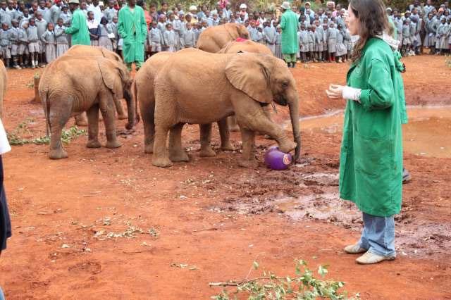 فوتبال بچه فیل ها
